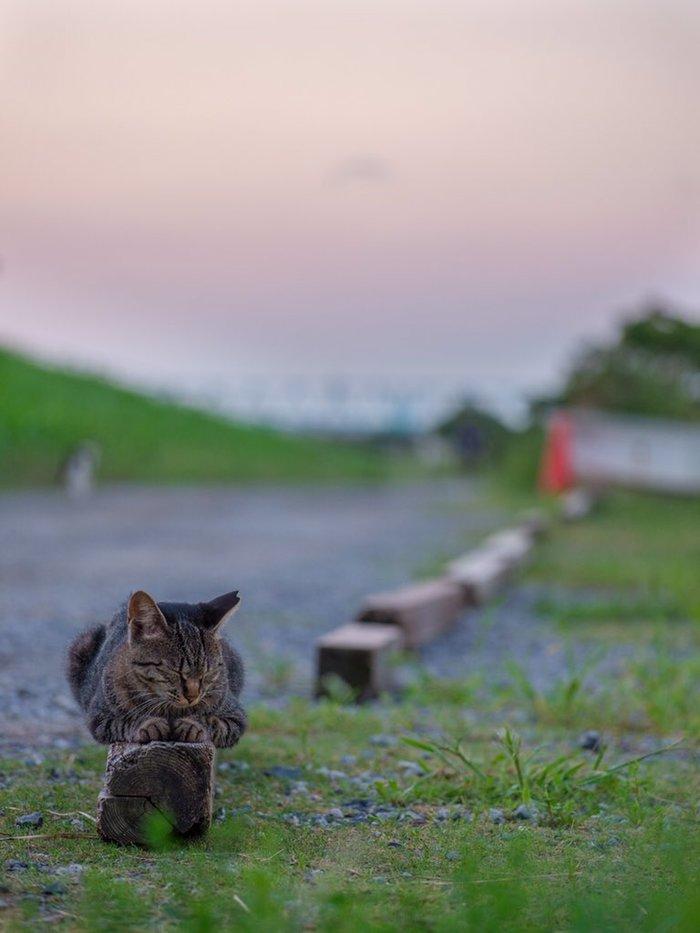 QuotВ мире нет такого места или понятия, на которе не смог бы прилечь кот... quot