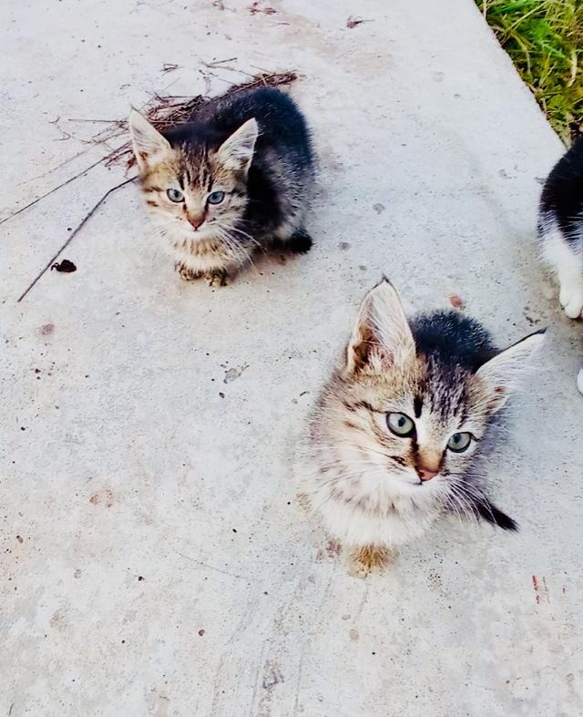 Пожалуйста, подарите шанс котятам с московских дач. Они слишком маленькие - не выживут