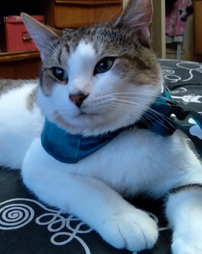 Молодой энергичный котейка, по имени Лукас, ищет семью !