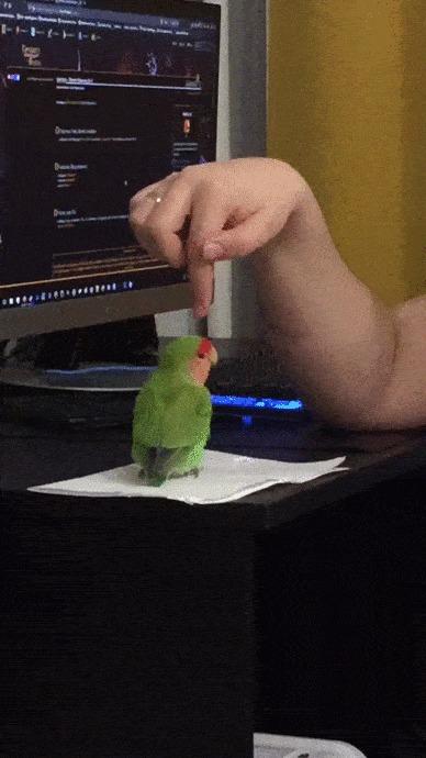 Попуг-убийца