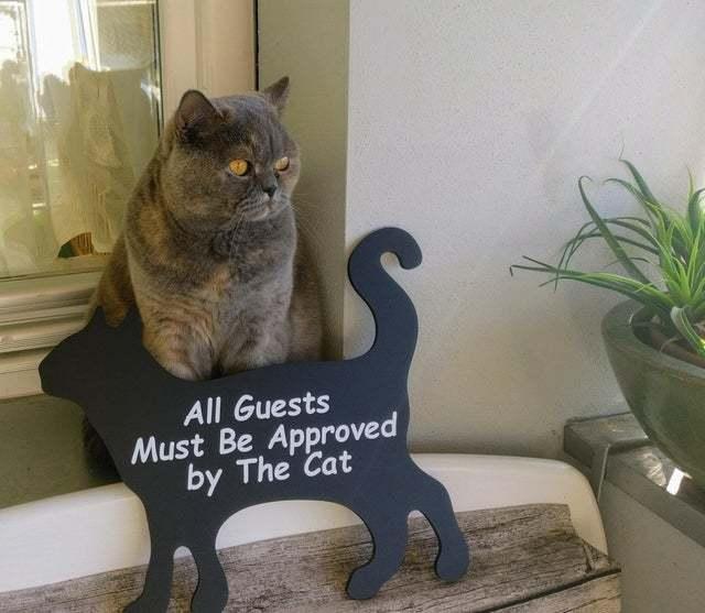 Все гости должны быть одобрены котом
