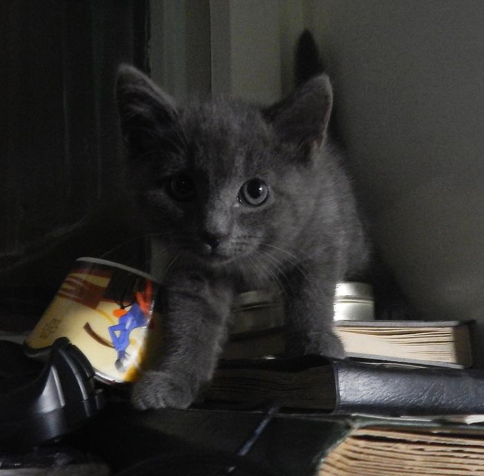 СПБ котенок девочка 1,5 месяца ищет дом!