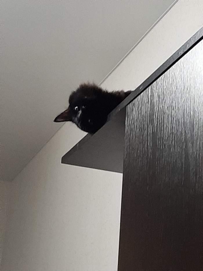 Кот - ворона