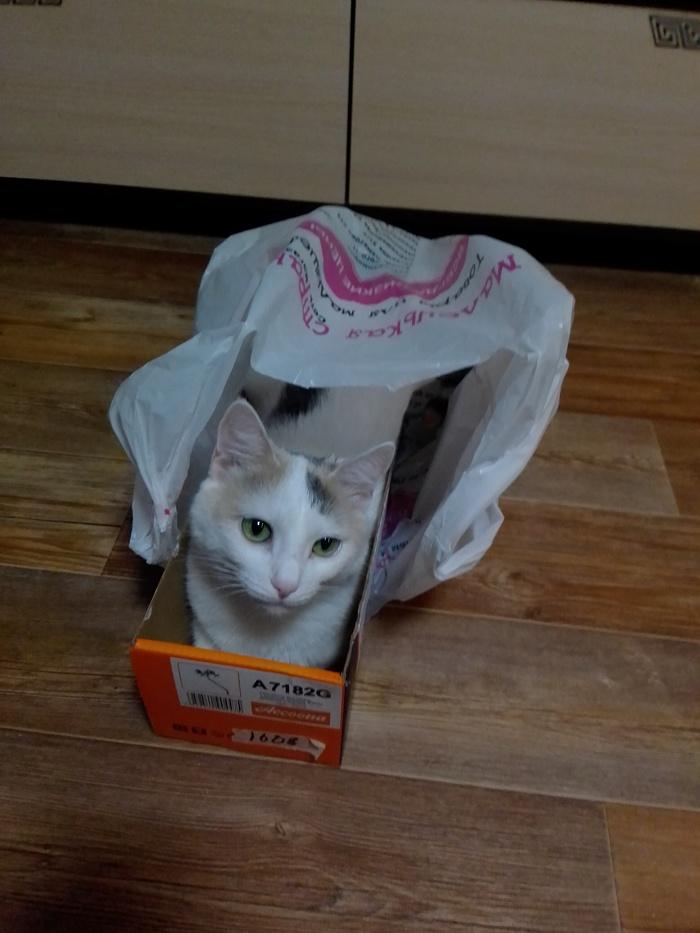 Комбо-кошка