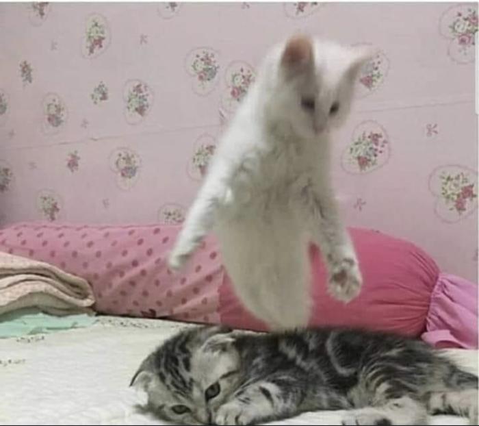Редкое фото души кота