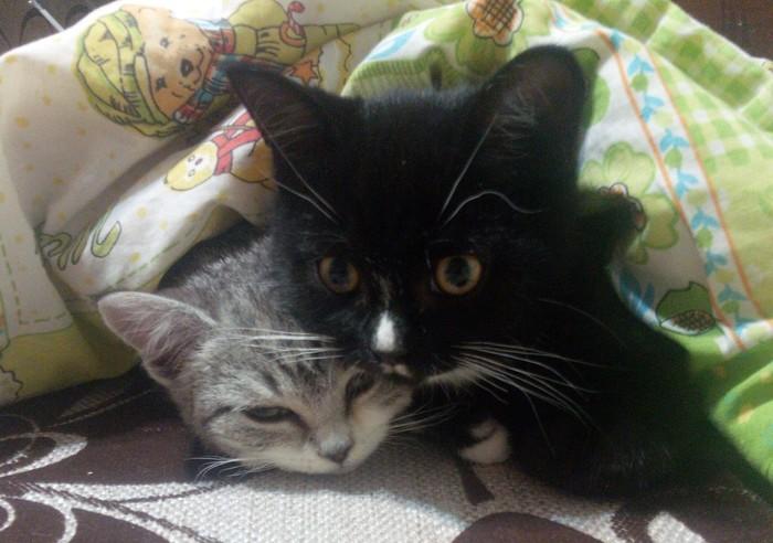 Два котейки