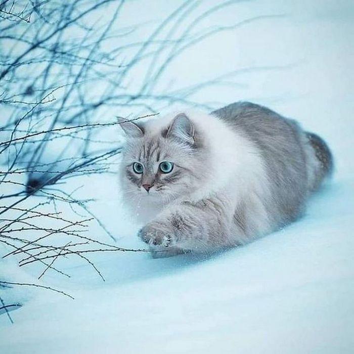 Тихо крадётся зима...