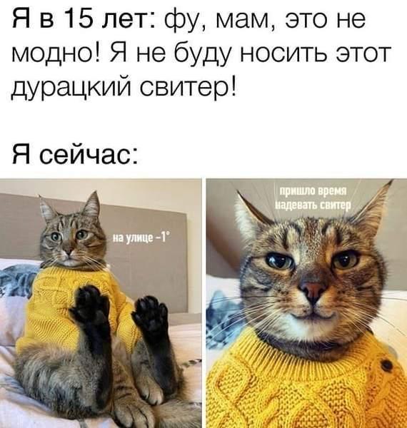 Осень, свитер, одежда