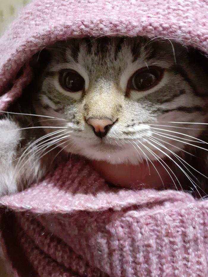 Просто утеплённый кот вам в ленту)