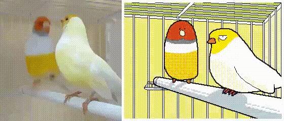 Экстраверт vs интроверт Арт, Птицы, Попугай, Интроверт, Экстраверт, Гифка, k-Eke
