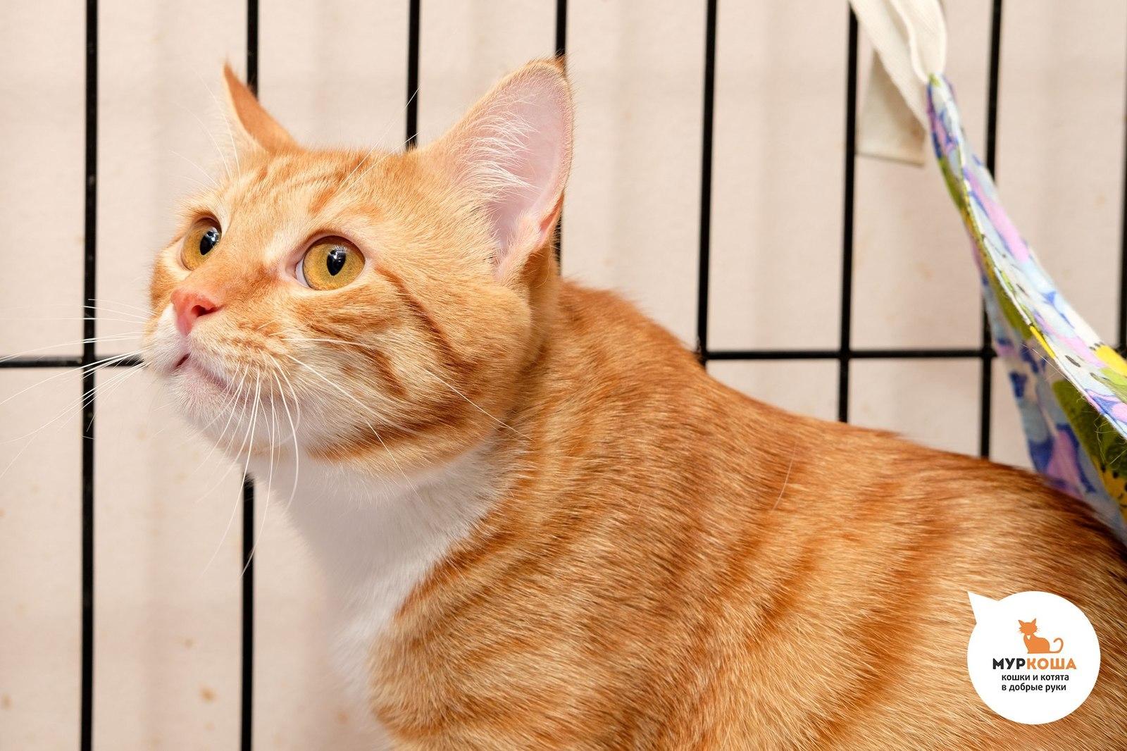 прививка коту от токсоплазмоза