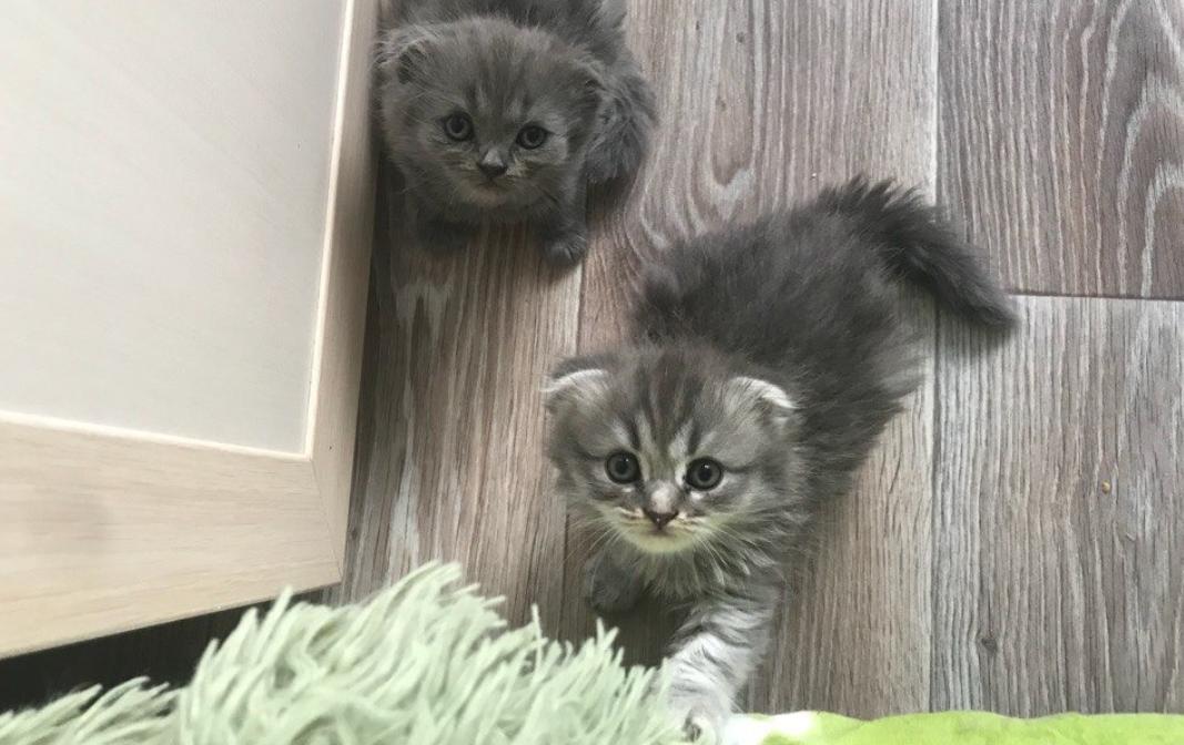 фотографии породистых кошек