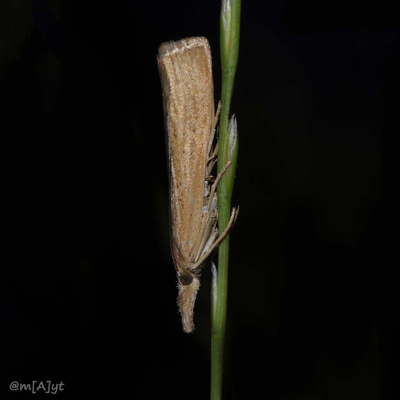 Пизда мотылек
