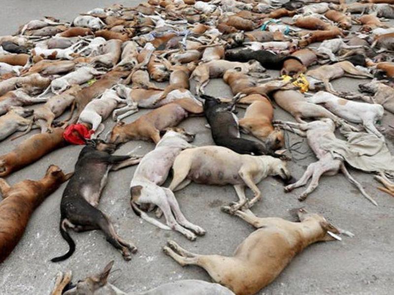 Немецкие СМИ разоблачили фотографию с убитыми собаками