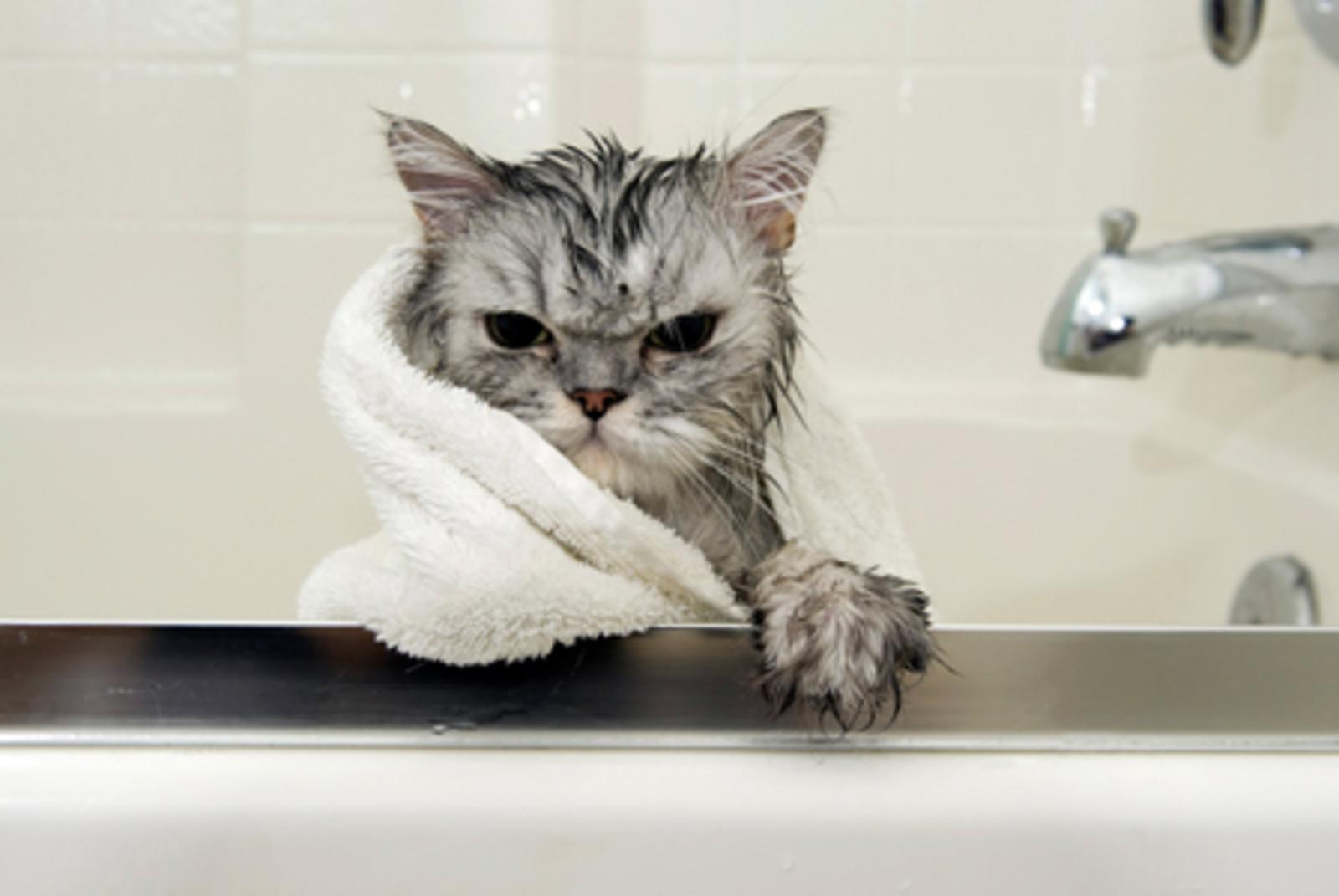 при какой температуре моют кошек