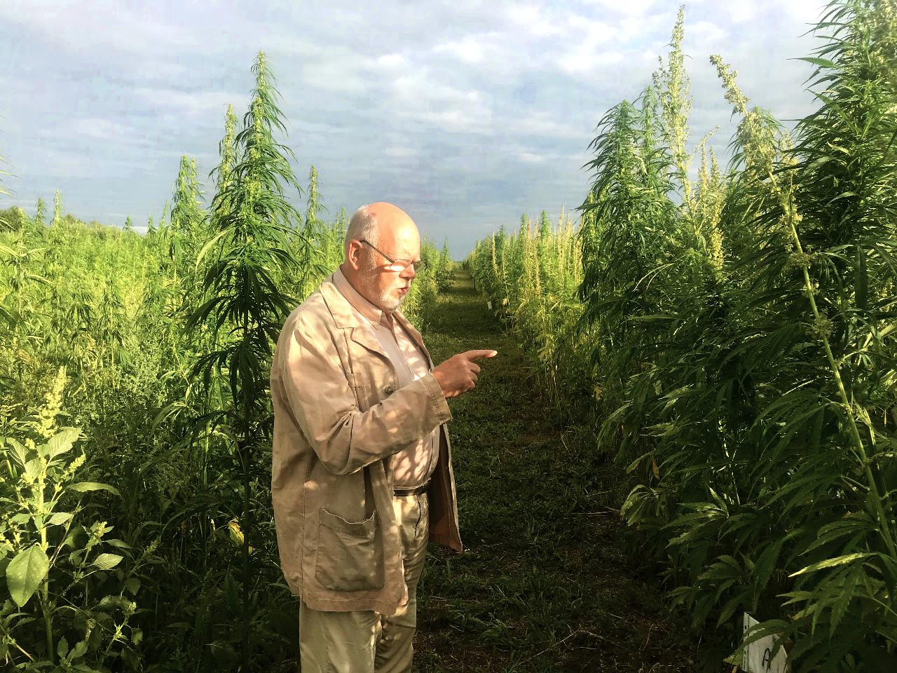 Где собрать конопля марихуаной торговля