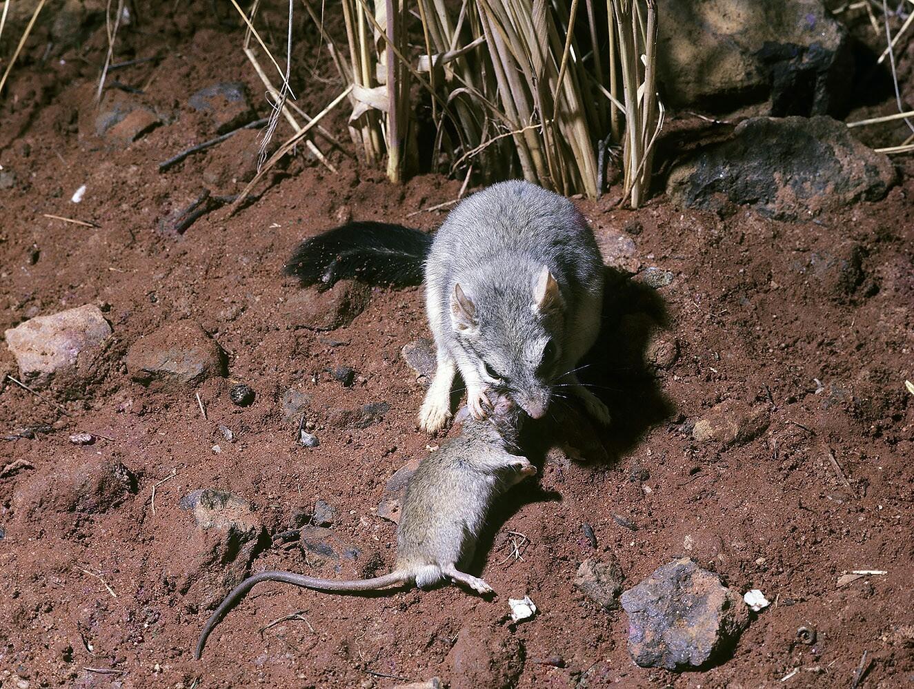 какое животное хищное мышь стрекоза носорог олень