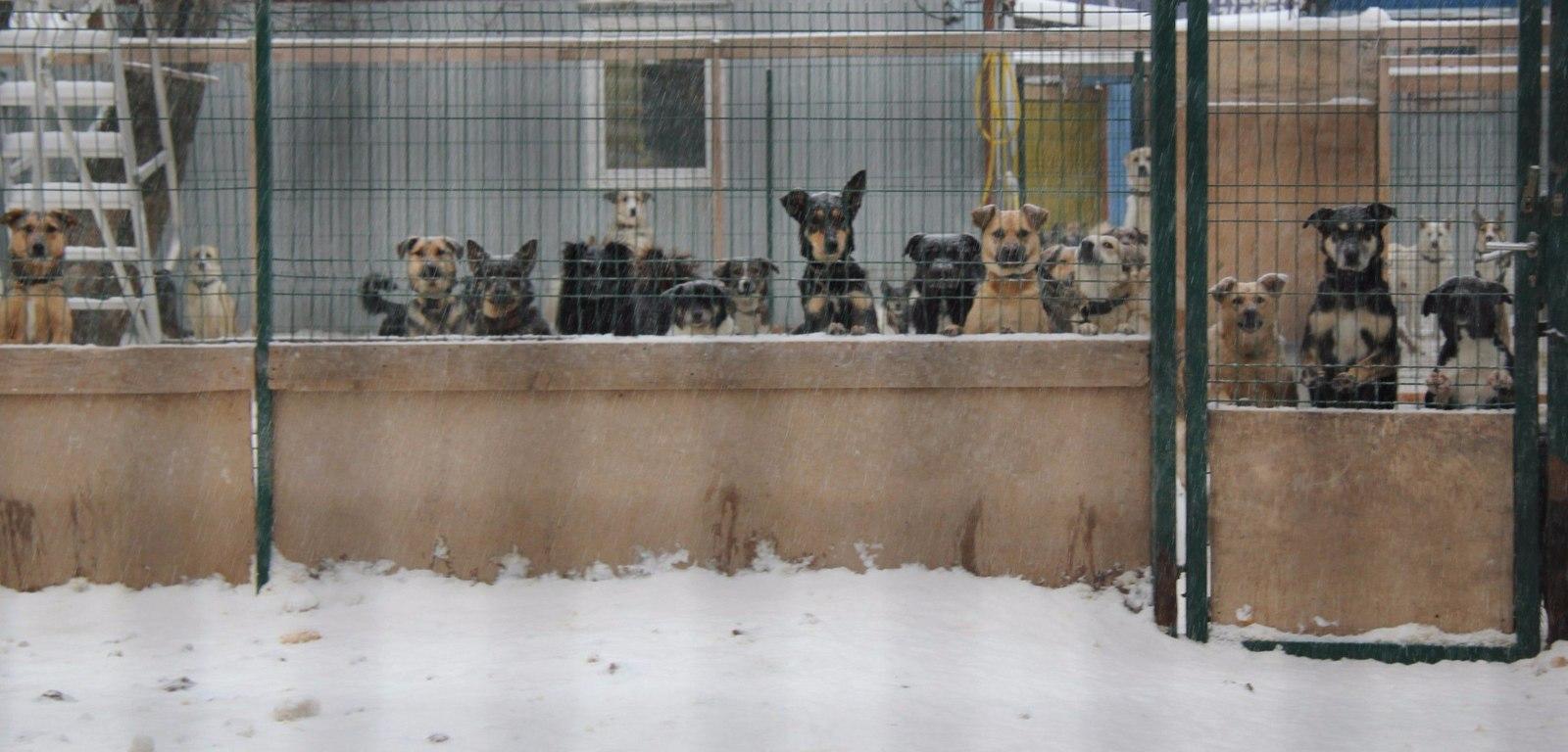 приют для животных некоммерческая организация