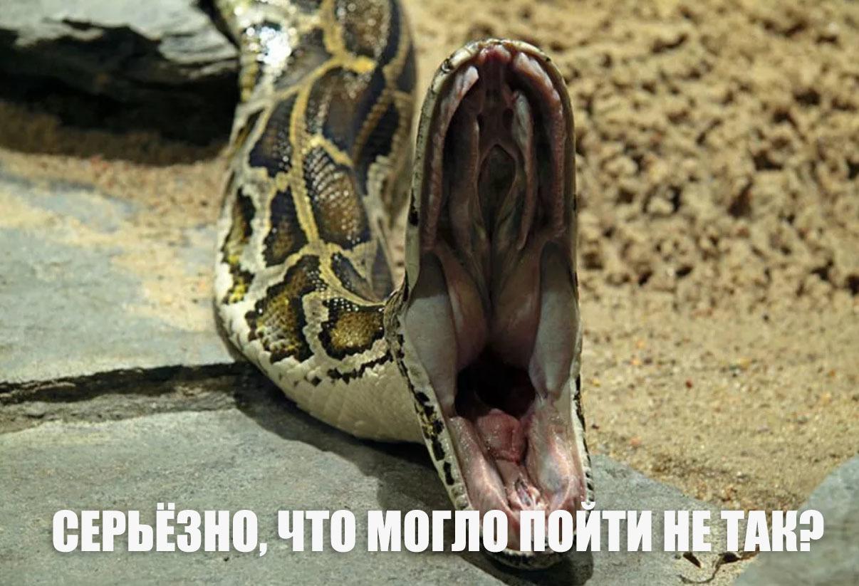кобра домашнее животное