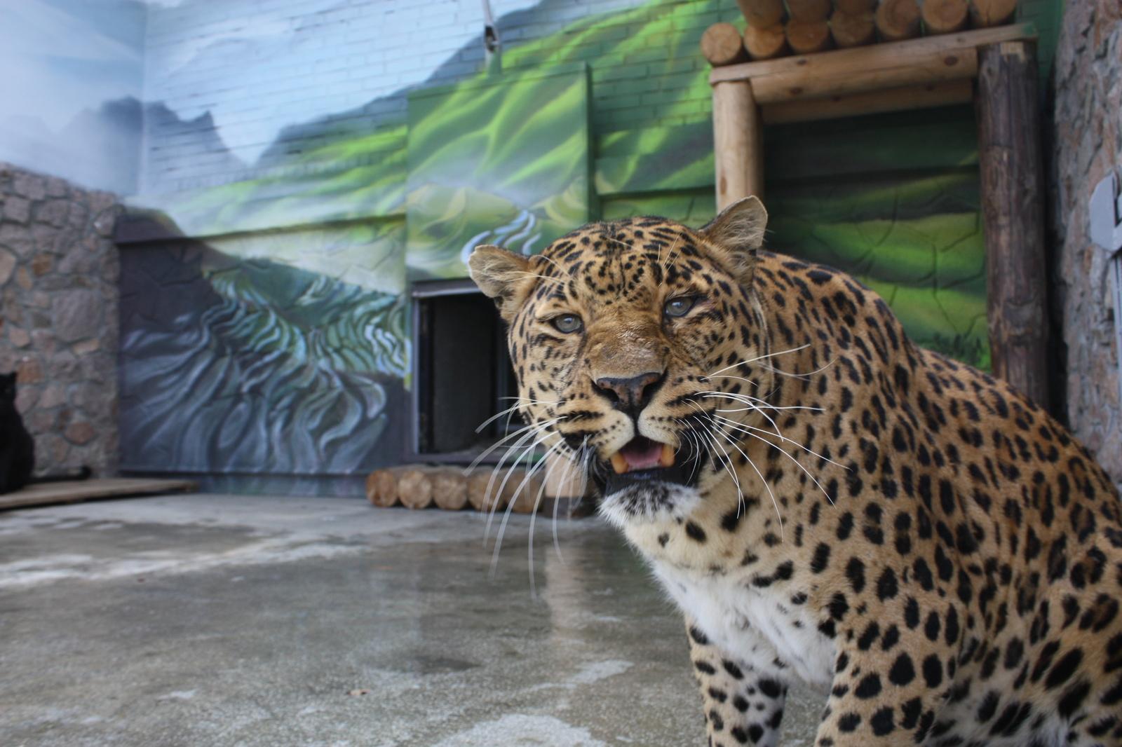 Обои африка, охота, сафари, Кошка, леопард. Кошки foto 16