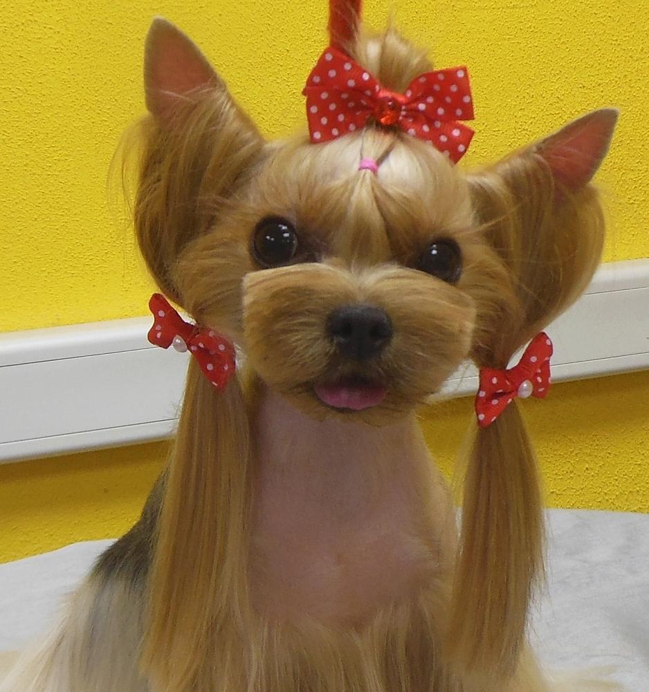 пушистые ровно подстриженные собаки