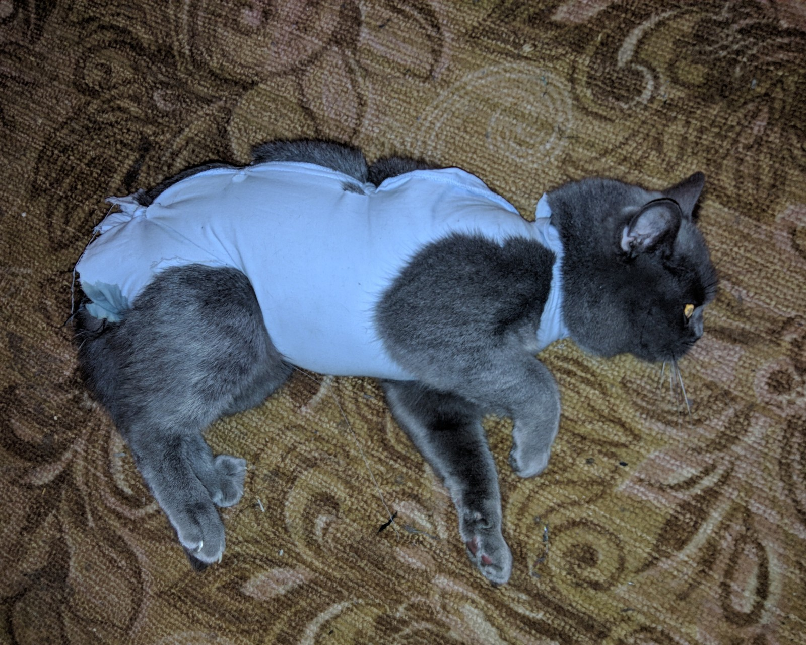 стерилизация кошек без удаления матки