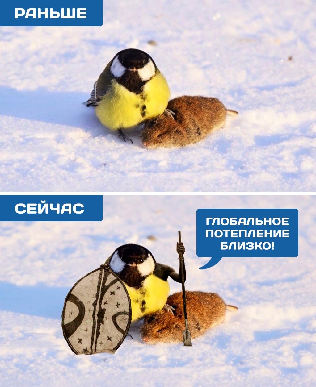 muzh-drugoy-zlie-ptichki-v-podvorotne