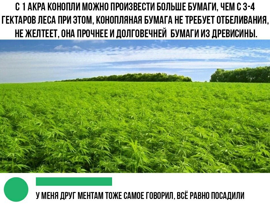 Друга посадили за коноплю марихуана с телками