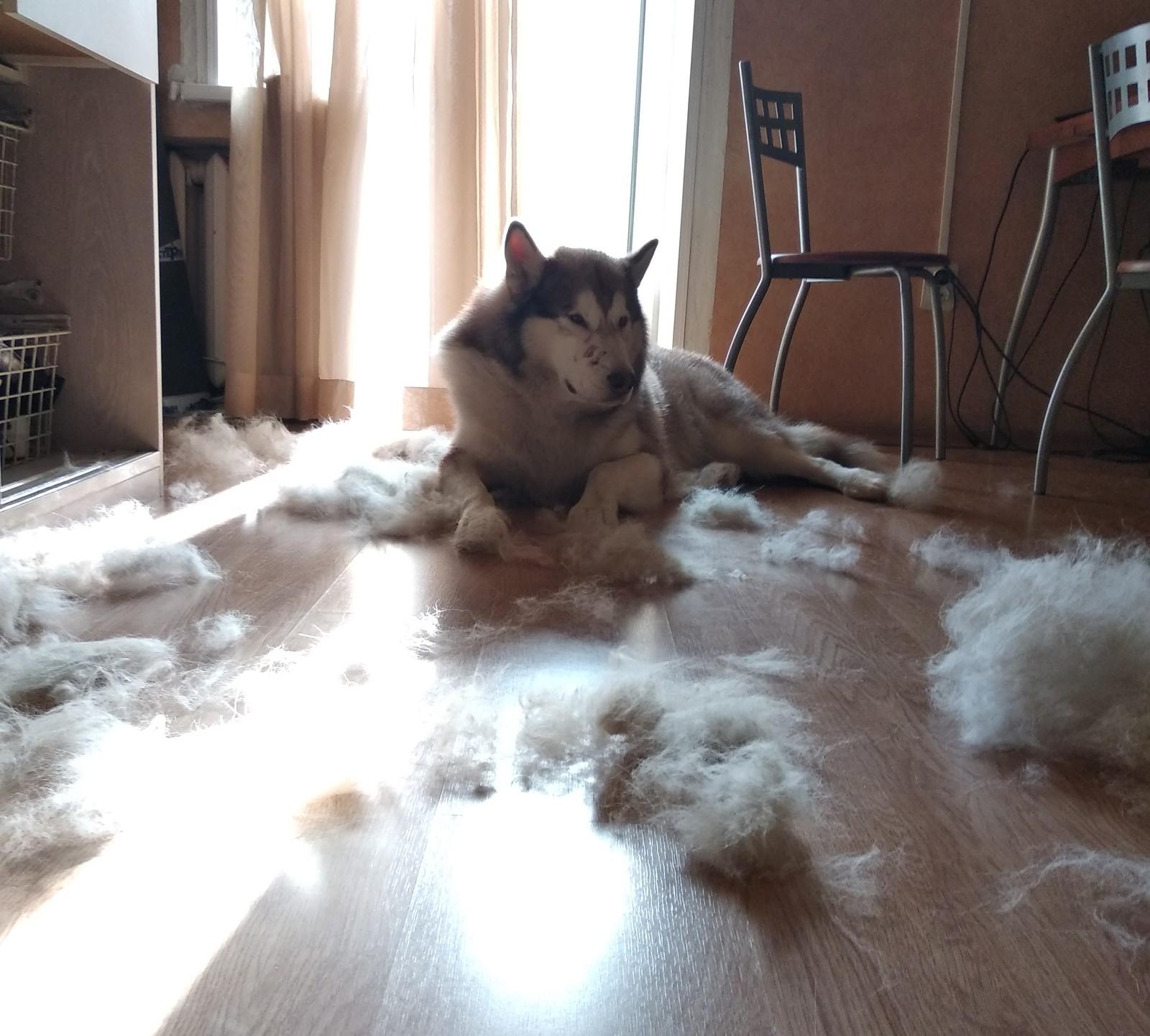 собака сильно линяет осенью