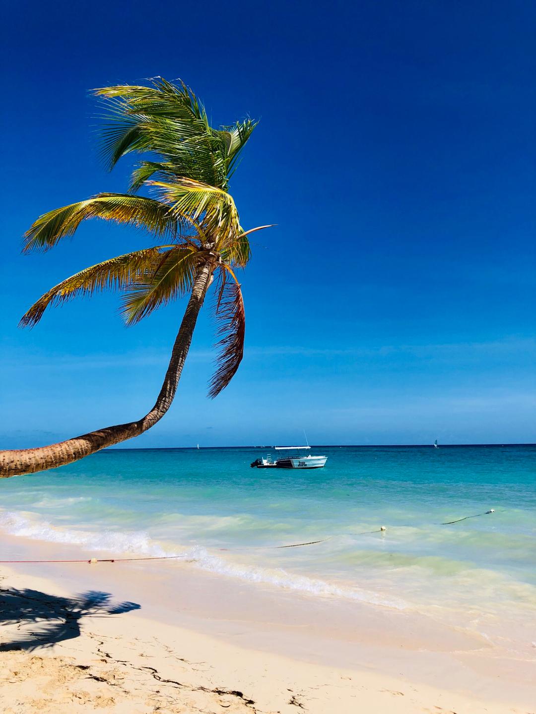 Марихуаны в доминикане ответственность за хранение конопли