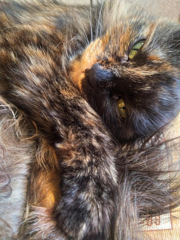 ТЫ МОЯ КИСА | Пьяный кот, Смешные кошки, Сумасшедшие кошки | 2730x2048
