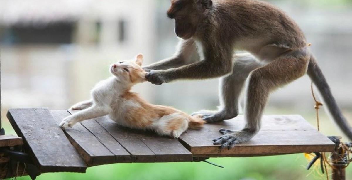 Букеты, смешные и забавные картинки и видео с животными