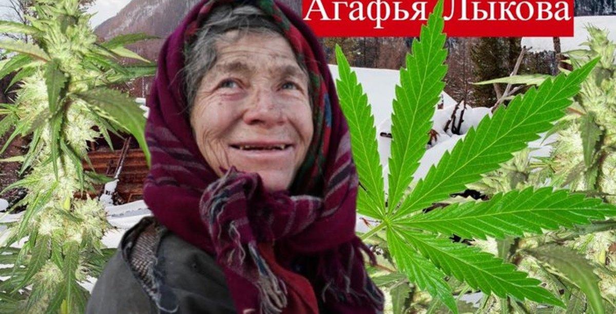 купить самые дешевые семена марихуаны